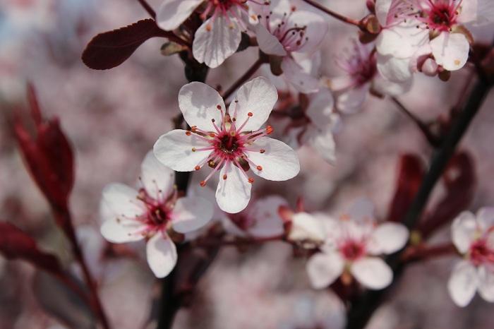 Makroaufnahme Blumen