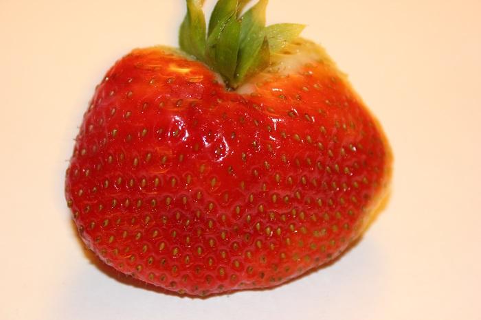 Wann beginnt die Erdbeerzeit?