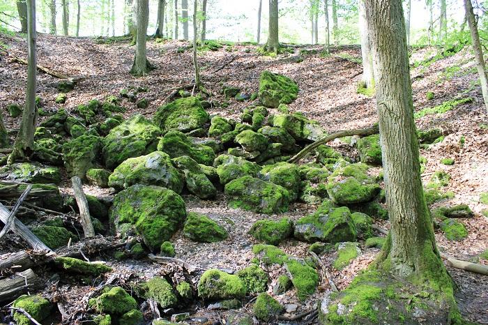 Natur Binger Wald