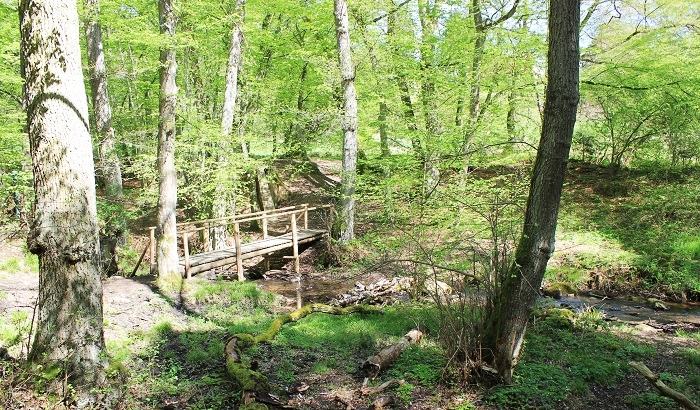 Wanderwege im Binger Wald