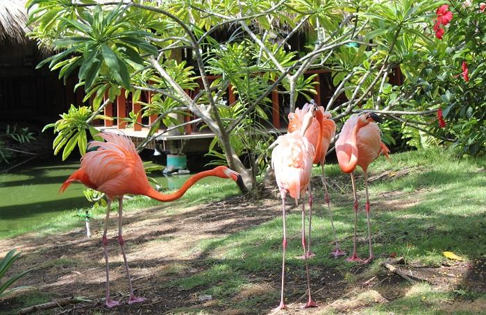 Tiere in der dominikanischen Republik