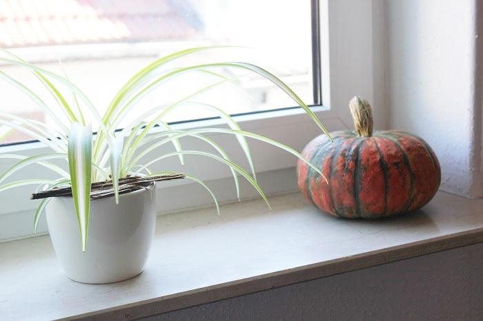 Ideen: Herbstliche Dekoration