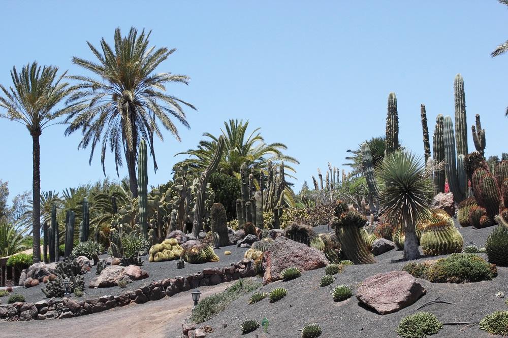 Botanischer Garten Fuerteventura
