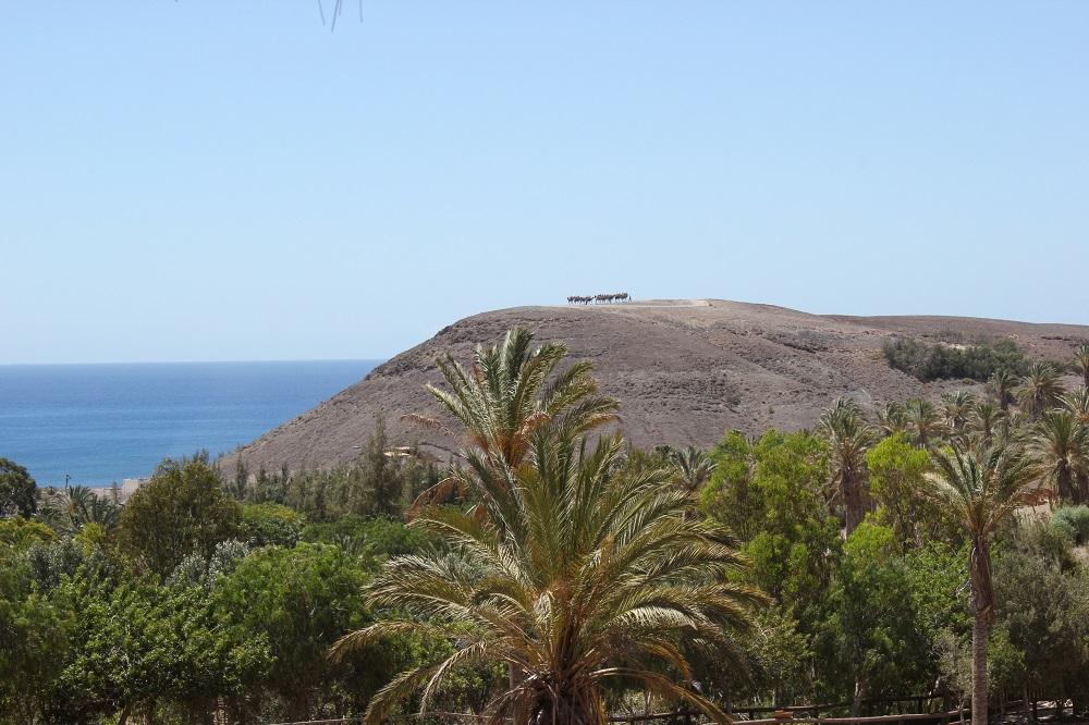 Flora und Fauna Fuerteventura