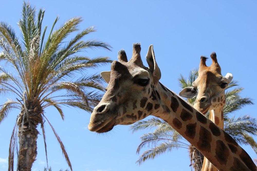 Fuerteventura | Oasis Park |