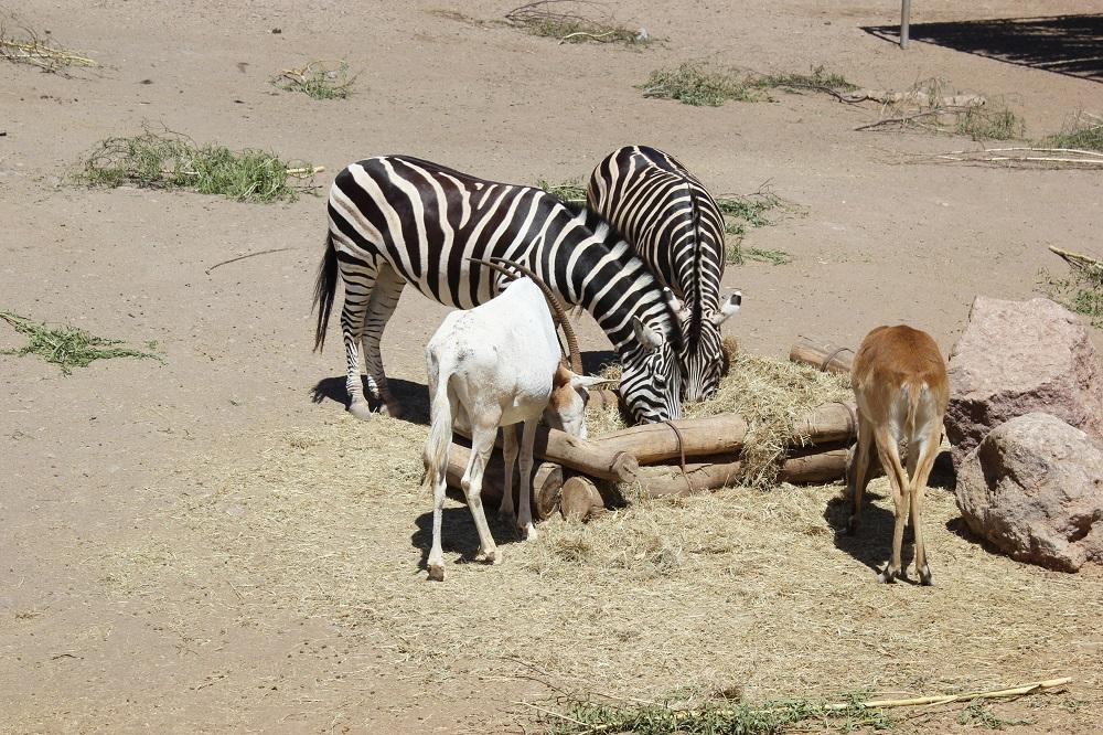 Tierpark Fuerteventura