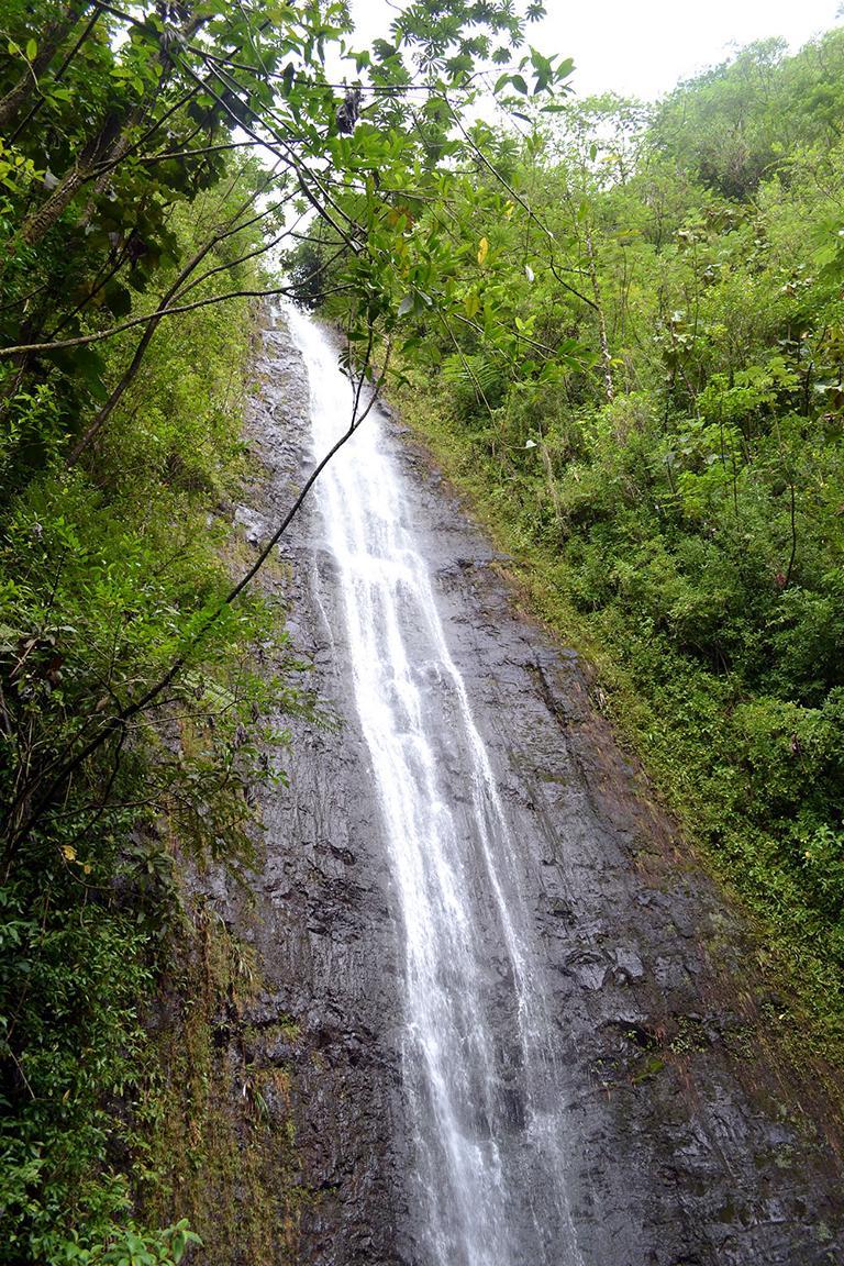 Manoa Falls Hawaii