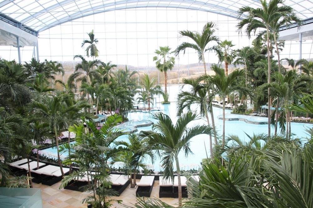 Palmenparadies Deutschland