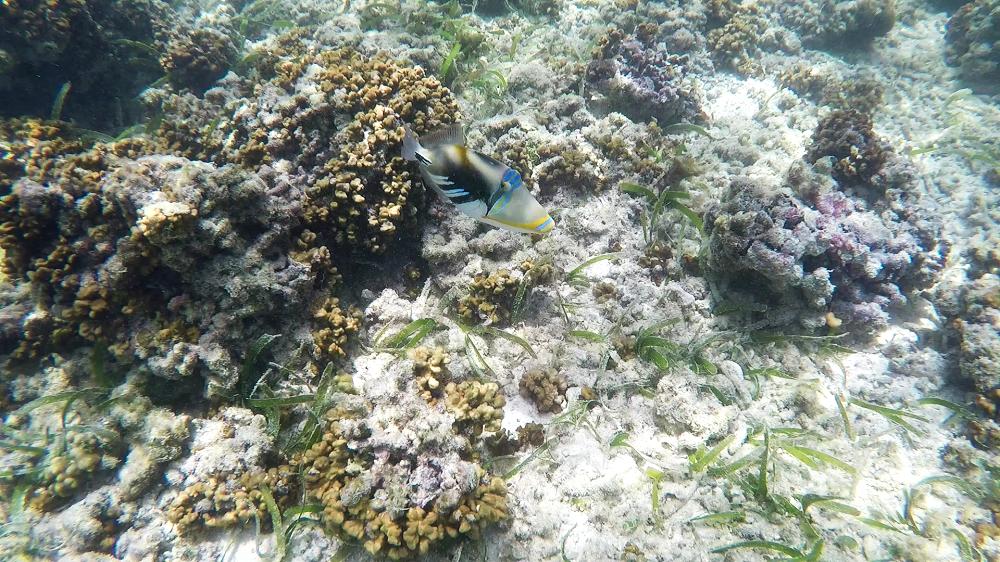 Korallen Malediven