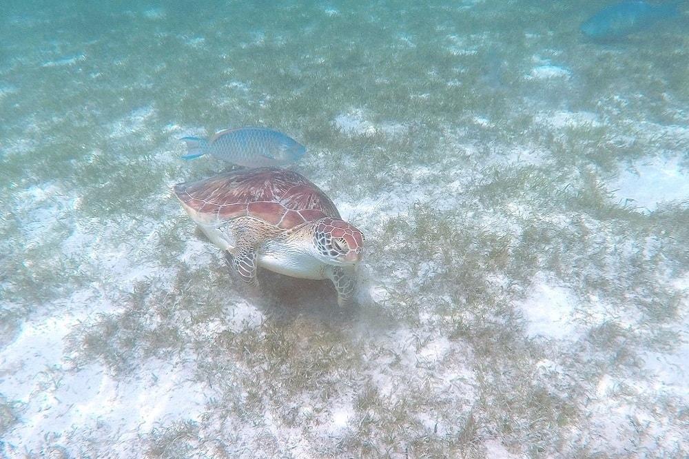 Schildkröten Malediven
