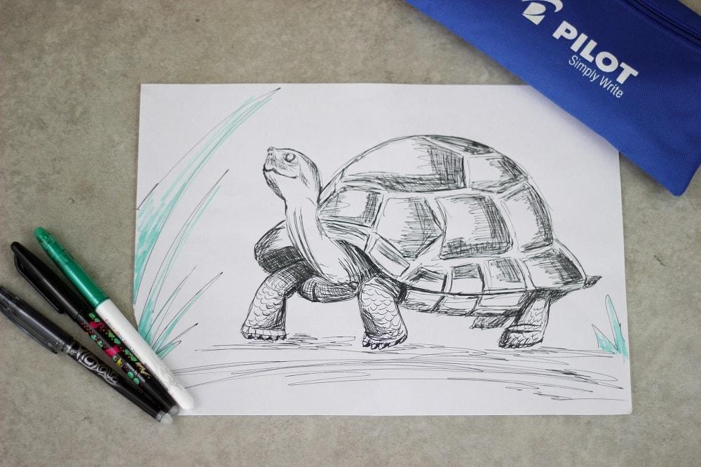 Wasserschildkröte Kuredu