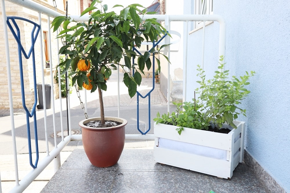 Diy Mobiler Kräutergarten Für Den Balkon The Inspiring Life